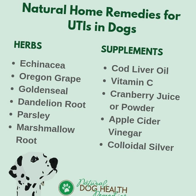 at home uti cures